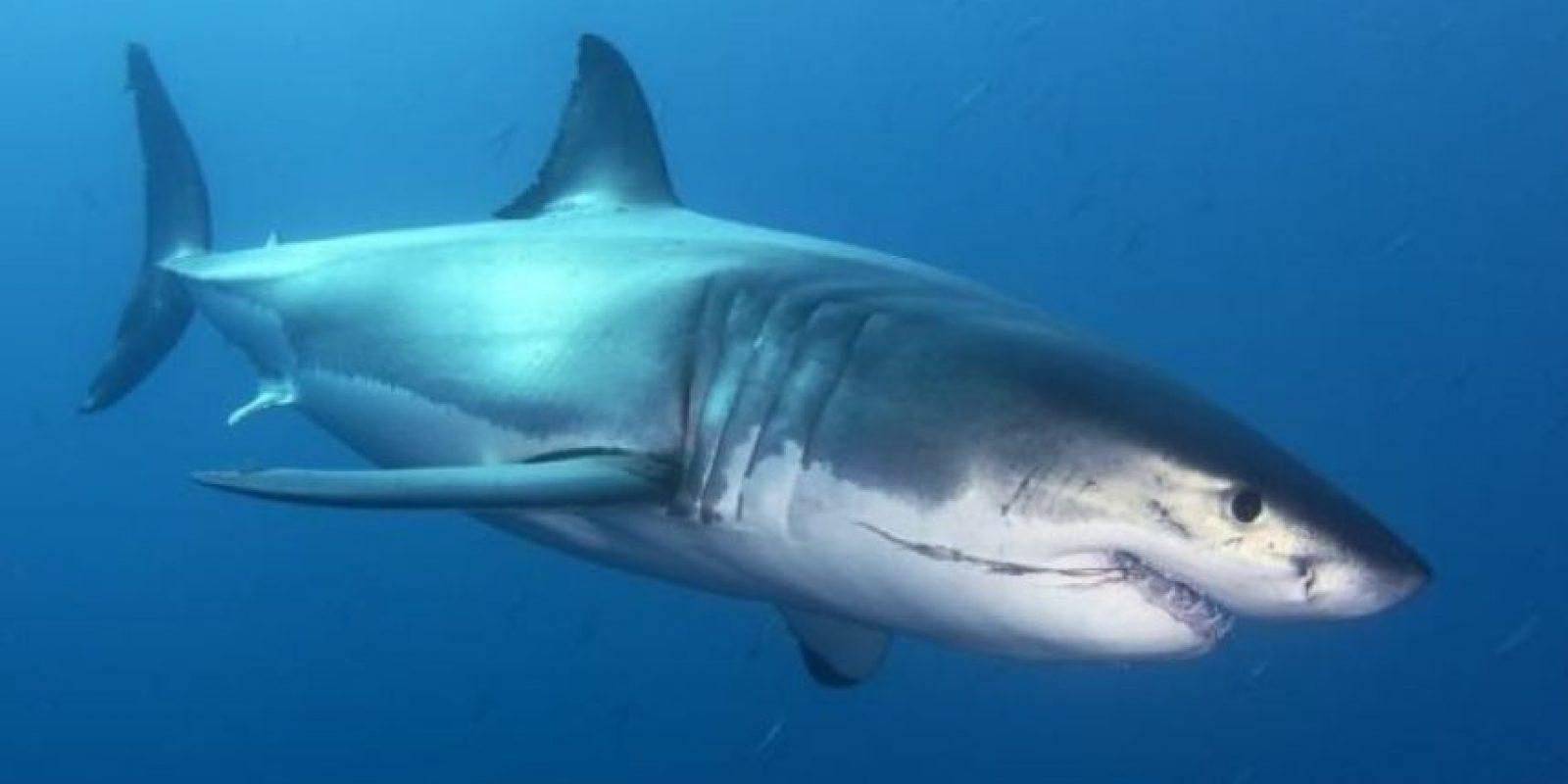 """En su ranking, los tiburones sólo provocan 8% de muertes, mientras que las selfies 12% de muertos en lo que lleva de este año. Sin embargo, el sitio estadounidense """"The Washington Post"""" afirma que es absurdo realizar dicha comparación, pues el ataque de un tiburón es un mecanismo """"directo a la muerte"""" y las selfies llamadas por los especialistas de la salud, son mecanismos subyacentes. Foto:Tumblr"""