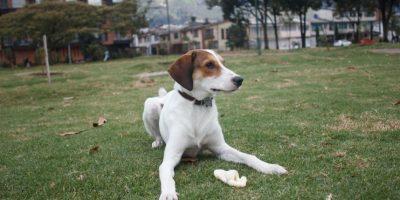 Antwan ama jugar con su hueso en el parque y es muy amiguero. Foto:Juan Pablo Pino- Publimetro