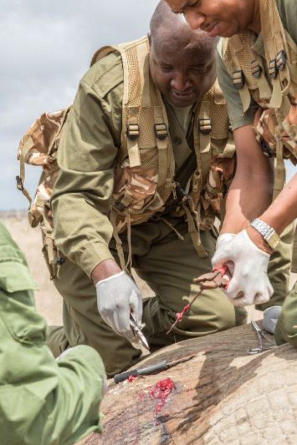 Eso fue en el Parque Nacional Tsavo, en Kenia. Foto:vía Barcroft Media