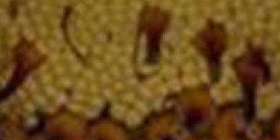 Y por supuesto, los tripofóbicos… Foto:vía Jardín Botánico de Chicago