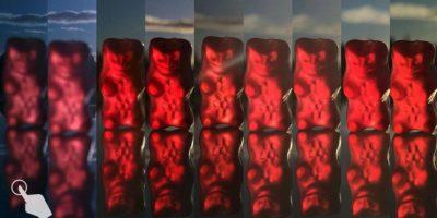 Comparación de todas las cámaras de los smartphones de Apple Foto:Lisa Bettany/snapsnapsnap.photos