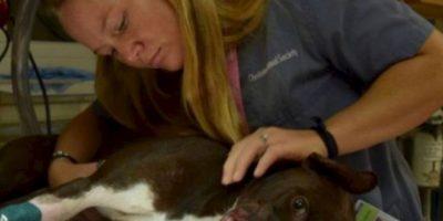 Y arrestaron a su dueño. Foto:vía Asociación de Animales de Charleston