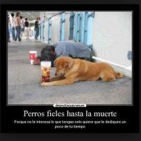 Así demuestran los perros su fidelidad con sus amigos humanos Foto:Desmotivacion