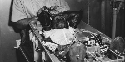 Los monos fueron clave para allanar el camino en la carrera a la Luna. Foto:Vía Wikimedia.org