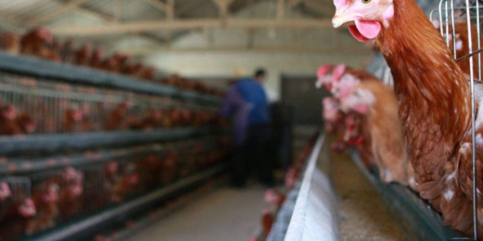 """Es por eso que les propuso a sus trabajadores """"darles"""" unos pollos para que los revendan. Foto:Getty Images"""