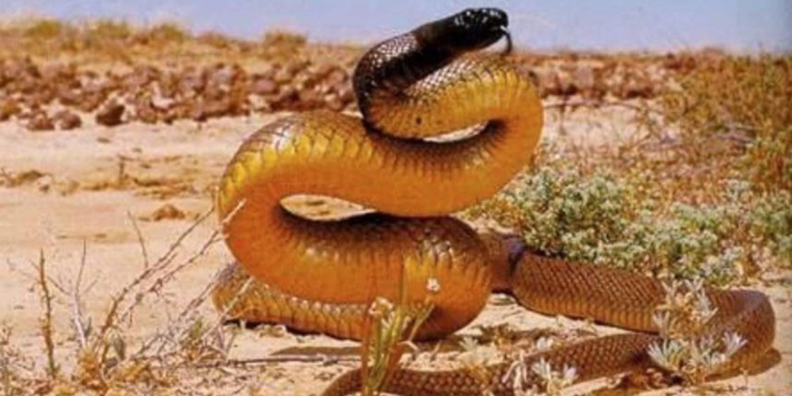 7. Serpiente marrón oriental Foto:Pinterest