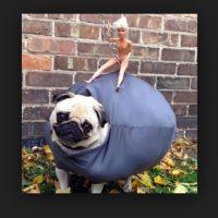 ¿Miley sobre el perro? Foto:Tumblr.com/Tagged-costumes-pets
