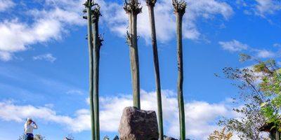 El parque metropolitano, los espera con una extensión de 557 hectáreas, ubicado al norte de la ciudad. Foto:Vía quito.com.ec