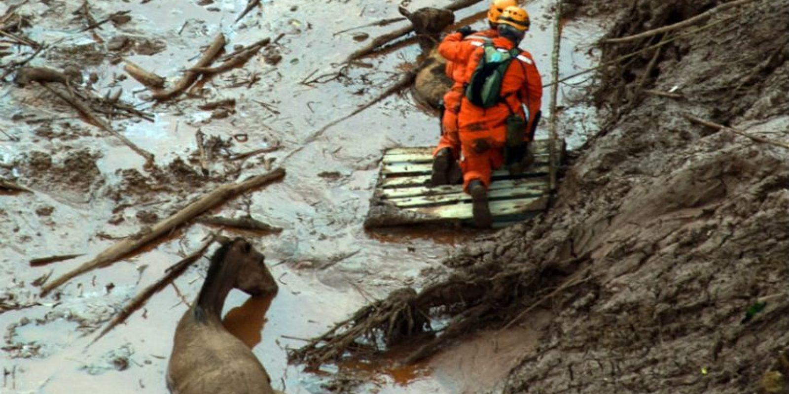 También se busca la manera de rescatar a los animales. Foto:AFP