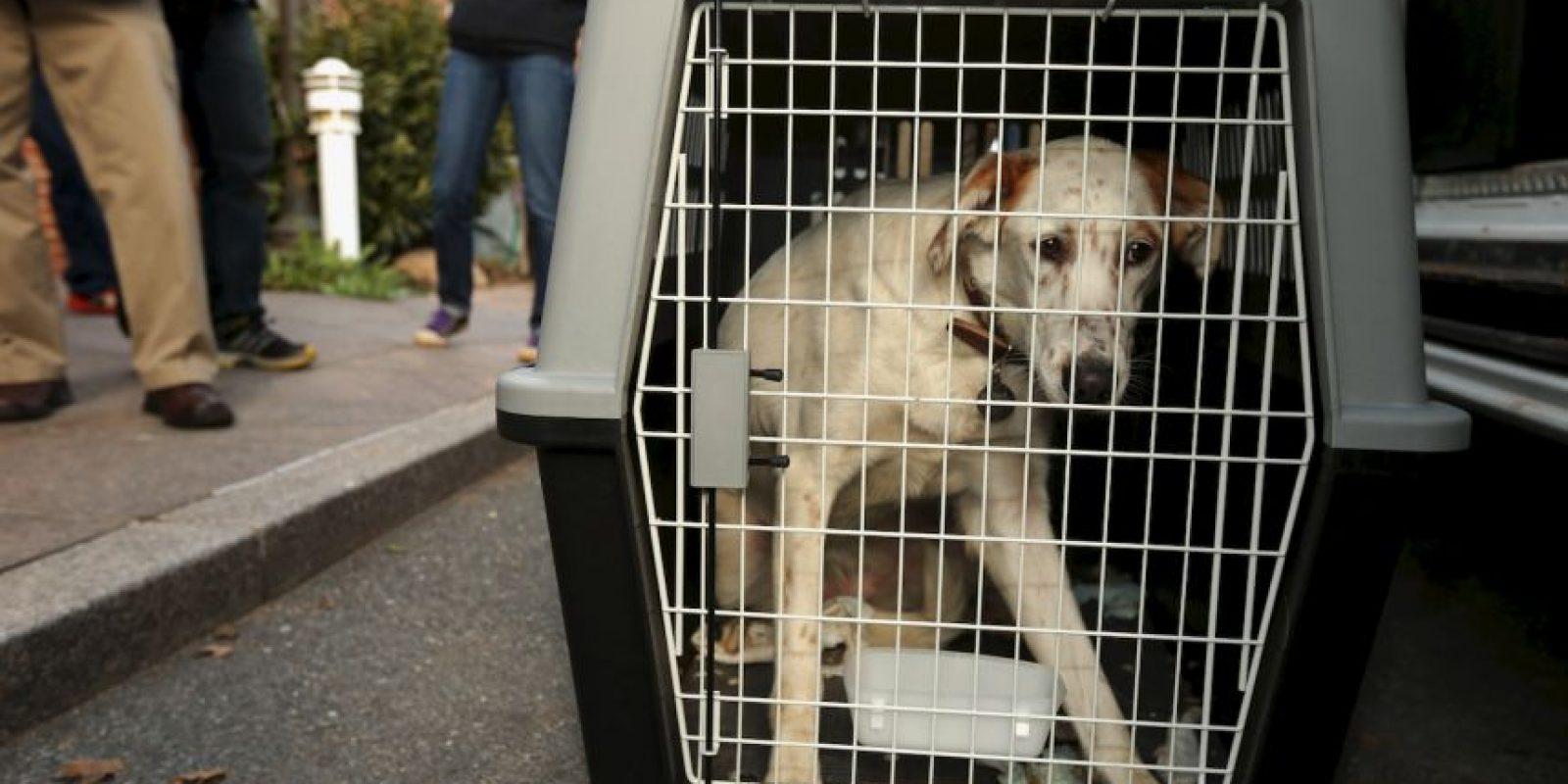 También recuerden que no en todos los edificios está permitido tener mascotas y algunos tienen restricciones. Foto:Getty Images