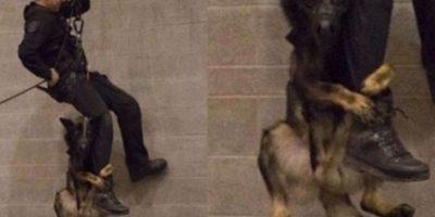 Este can está rompiéndo la red de Facebook con esta foto. Foto:Facebook/Vancouver Police Department