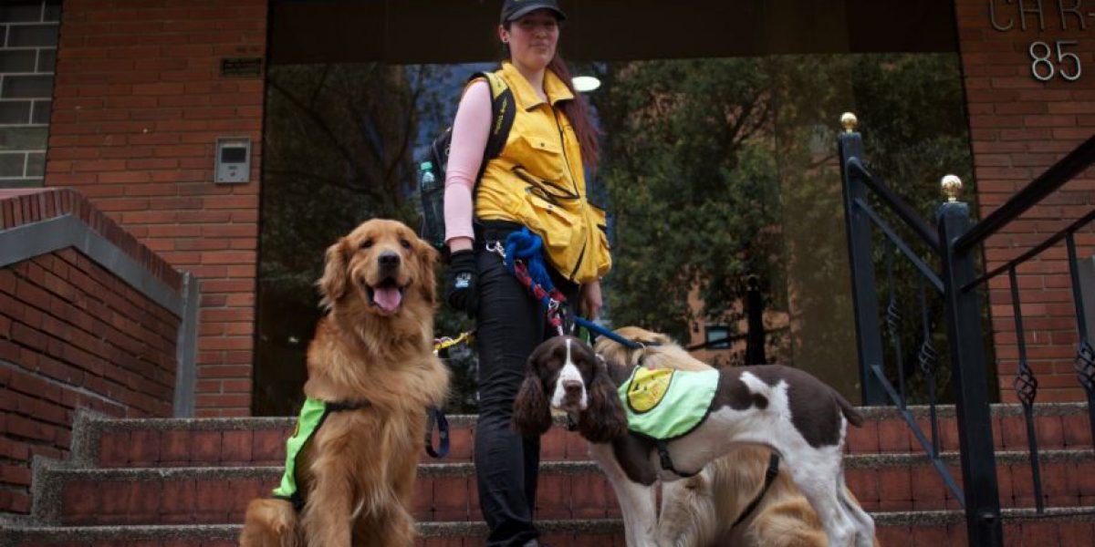 Caminador de perros, un oficio con más de 'dos patas'