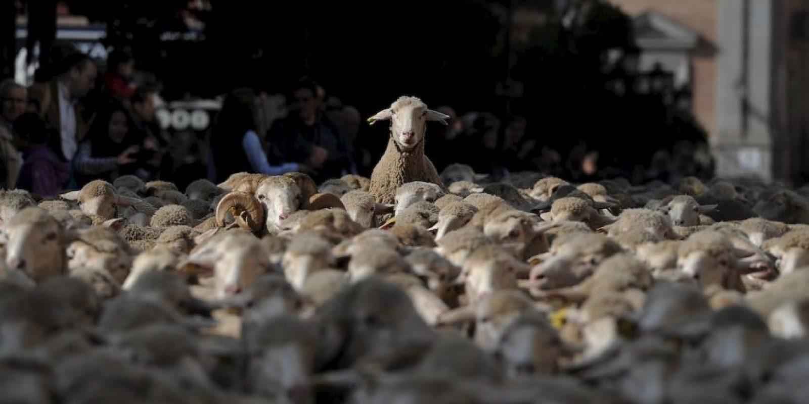 Es decir, la golosina que acaba con el mal aliento proviene del sudor de estos animales. Foto:Getty Images