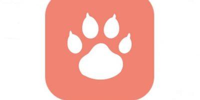 """Tindog: el nuevo """"Tinder para perros"""" Foto:Holidog"""
