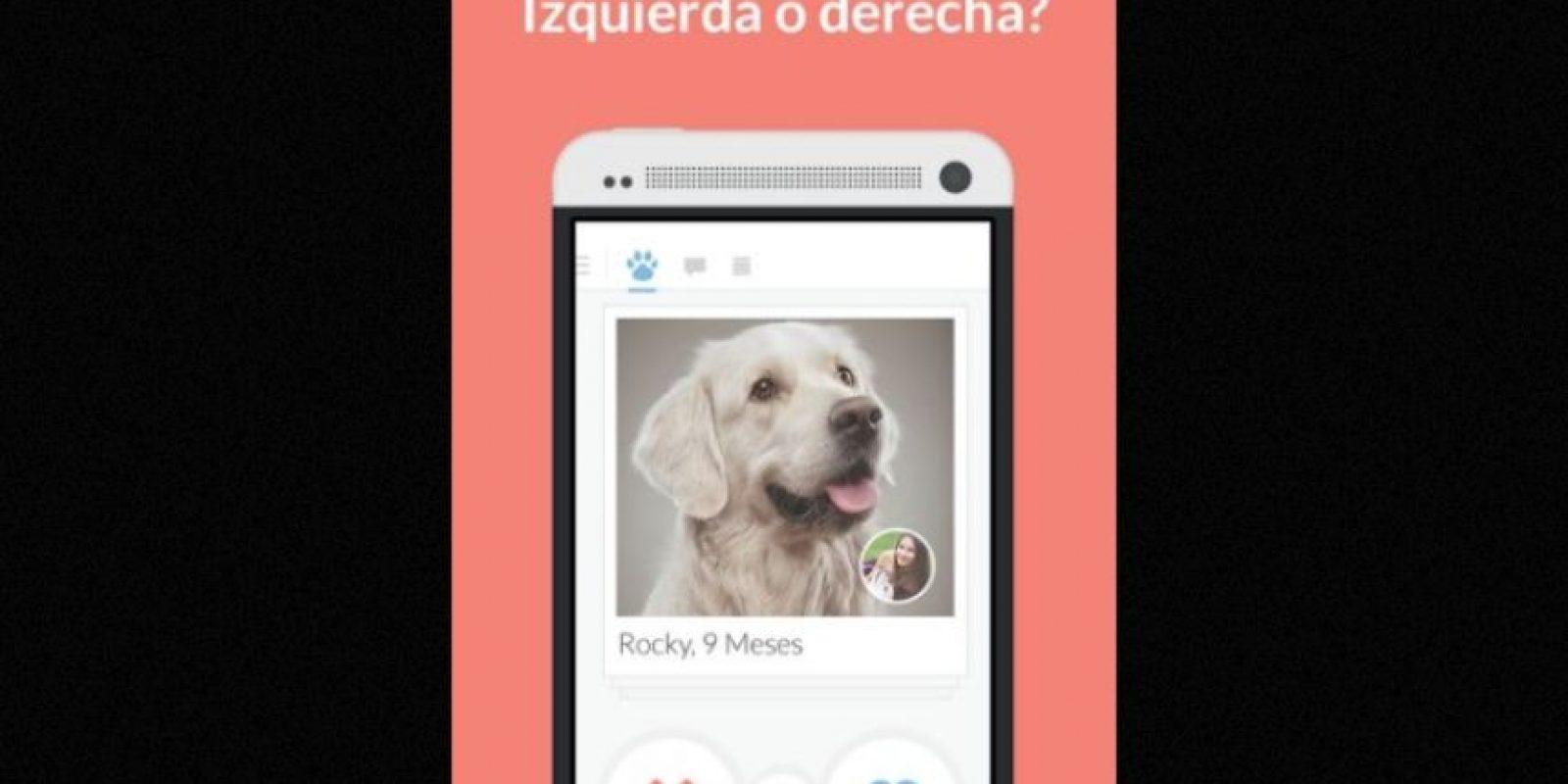 Tindog es la nueva forma de encontrar a esa persona especial, amante de los caninos. Foto:Holidog