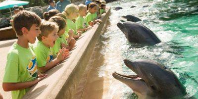 Foto:Vía facebook.com/SeaWorld