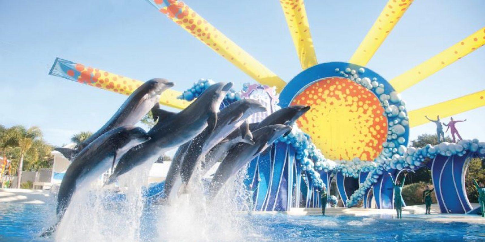 Es por eso que activistas a favor de los derechos animales luchan por suspender este tipo de espectáculos y han protegido a otros animales. Foto:Vía facebook.com/SeaWorld