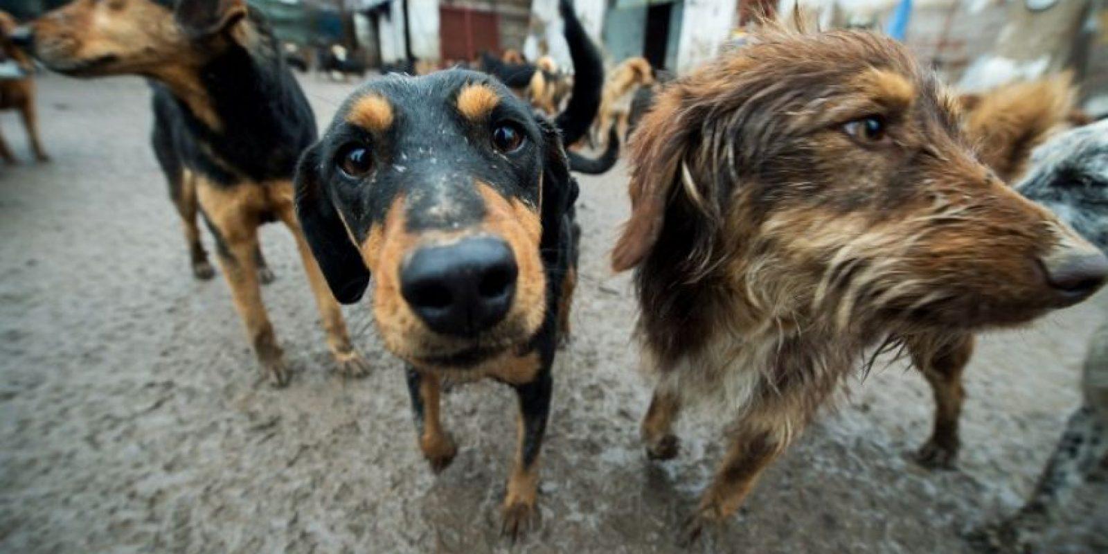 La segunda semana los perros llegan al lugar y se tratan de adaptar. Foto:AFP