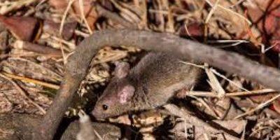"""Para evitar más crímenes por parte del raton """"narco"""" lo sacaron del penal. Foto:Vía pixabay.com"""