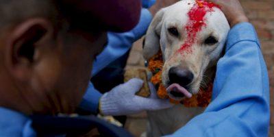 Policías condecoraron y agradecieron a los perros que ayudaron en las labores de rescate tras el terremoto del 25 de abril pasado Foto:AP