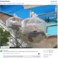 2. Ballenas son colocadas en bolsas de plástico gigantes Foto:Vía Facebook