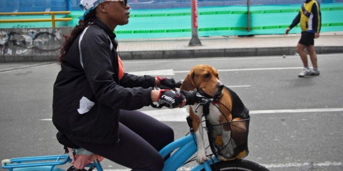 Así disfrutan las mascotas de la ciclovía en Bogotá