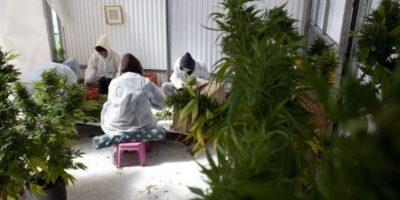 La Encuesta Nacional sobre Uso de Drogas y la Salud reveló que, en 2012, cerca de 18.9 millones de estadounidenses mayores a 12 años habían utilizado marihuana en el mes anterior al estudio. Foto:Getty Images