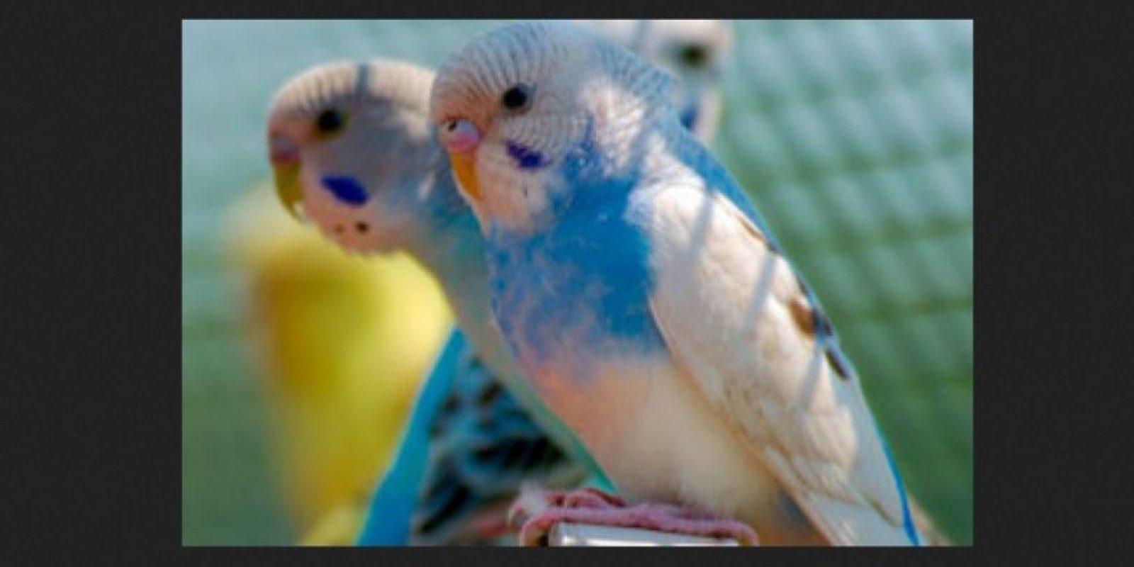 Hay varios tonos de azul, gris, blanco, cobalto, blanco, malva, violeta y algunos tonos de color más raros y mezclados. Foto:Tumblr