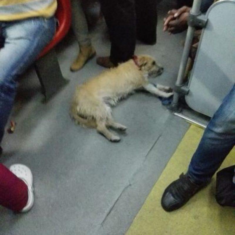 Mascotas también hacen uso del servicio Foto:Transmileniadas fotográficas / Facebook