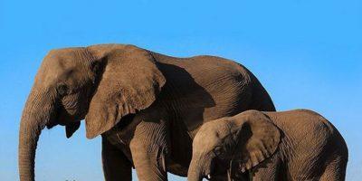 Elefantes, también del Zoológico Woodland Park Foto:Vía Instagram.com/woodlandparkzoo