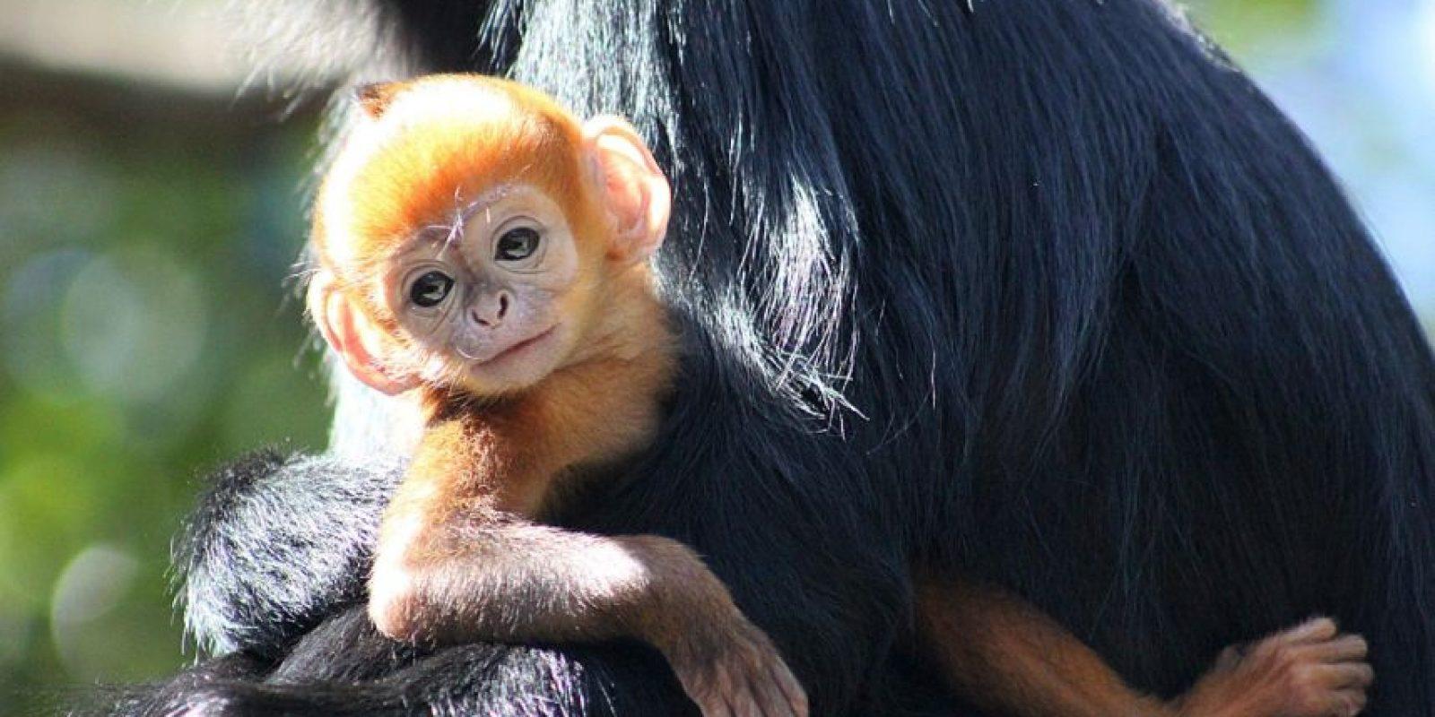 El zoológico aseguró que Nangua se encuentra en buen estado de salud. Foto:Vía Facebook.com/tarongazoo