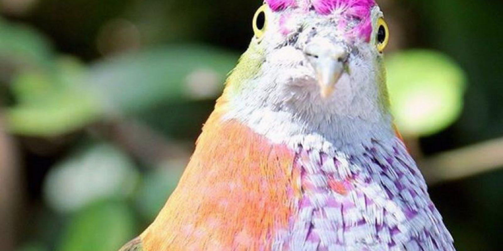 Palomas arcoiris Foto:Vía Facebook.com/tarongazoo