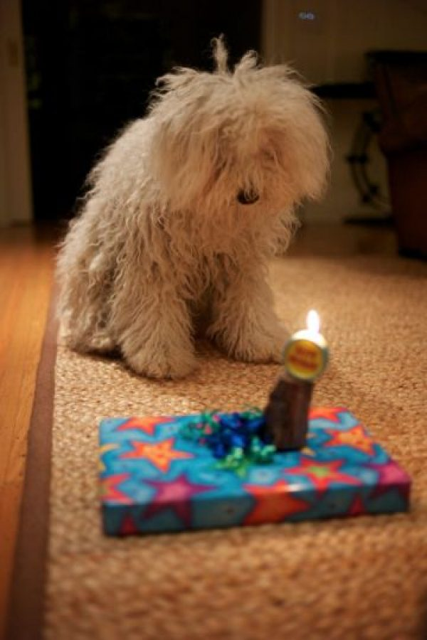 En uno de sus cumpleaños. Foto:facebook.com/beast.the.dog