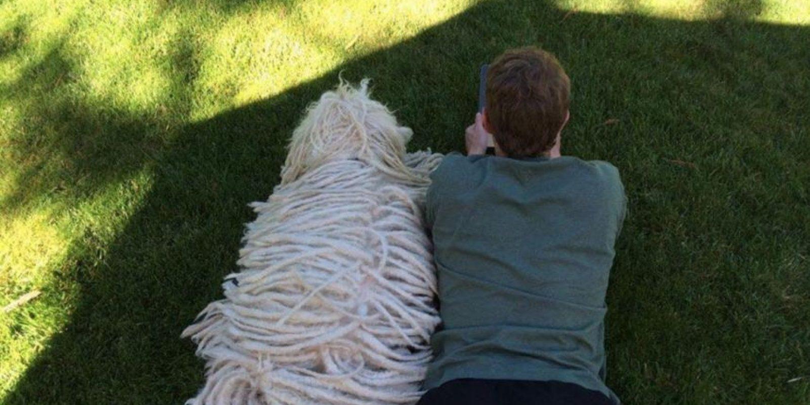 Mediante con Zuckerberg. Foto:facebook.com/zuck