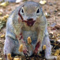 Imágenes que demuestran que las ardillas no son tan adorables Foto:Vía Tumblr