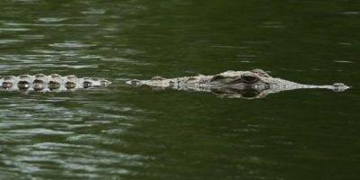 Las autoridades encontraron el cuerpo de Matthew Riggins en el lago Barefoot Bay y según explicaron se ahogó como consecuencia de un ataque de un reptil. Foto:Getty Images