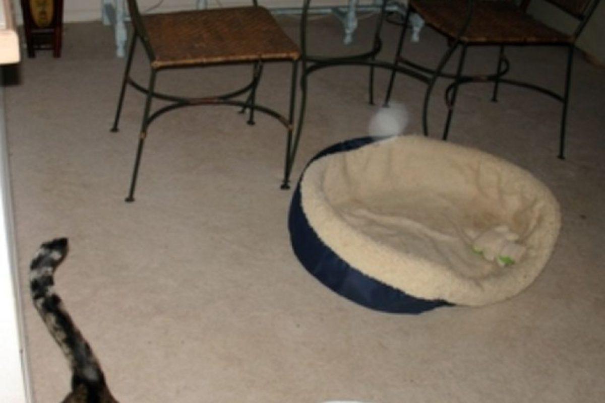 Miren la luz blanca encima de la cama de este gato. Foto:Vía Reddit