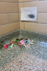 """Pero este caso no es el único. A continuación, un mapache pasó por el mismo """"tributo"""". Foto:Vía Imgur"""