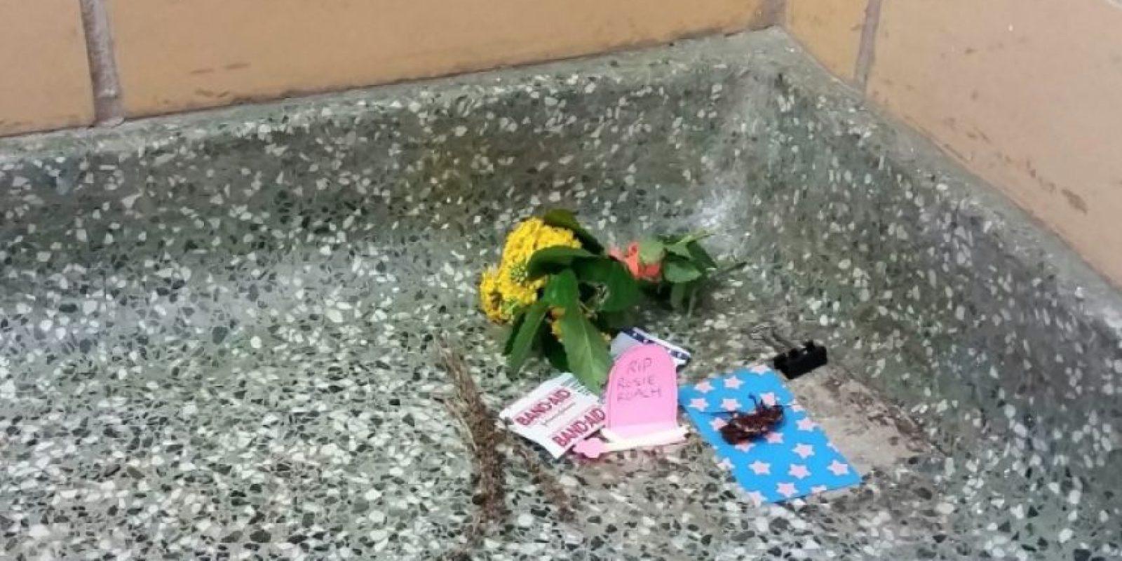Esto sucedió el 4 de diciembre. Comenzaron a llevarle flores. Foto:Vía Imgur