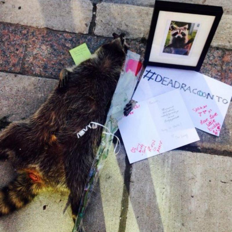 Con el hashtag #DeadRaccoonTO, habitantes de Toronto discutieron lo ocurrido, incluido Norm Kelly, un concejal de la ciudad. Foto:Vía Twitter.com/KrisReports