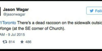 A través del Twitter oficial de la ciudad, se agradeció la denuncia y posteriormente las autoridades enviaron a los Servicios de Animales a recoger el cuepo del mapache. Foto:Vía Twitter.com/KrisReports