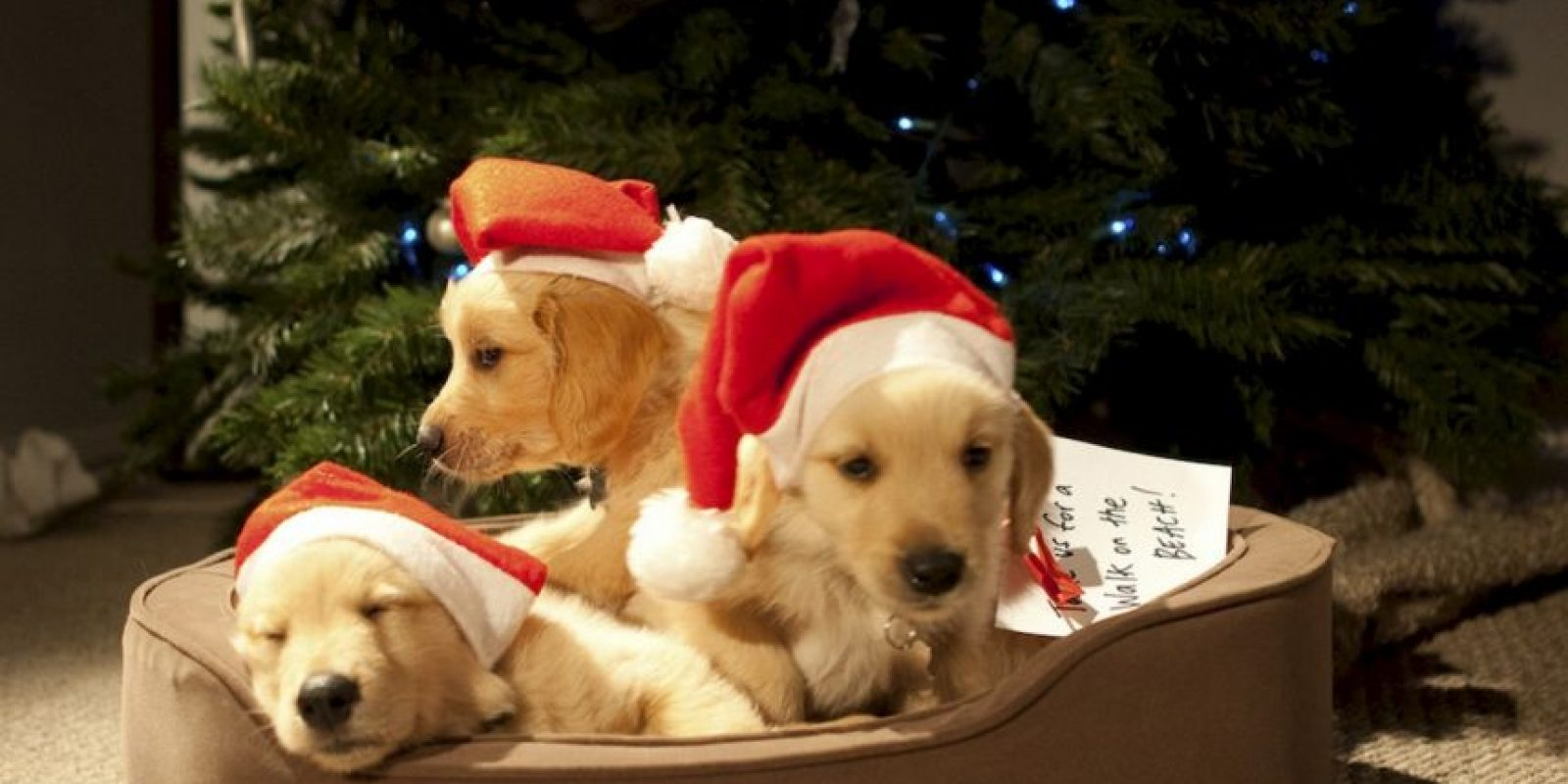 Con la ayuda de cuatro perros Golden Retrievers, la pareja de jubilados Tod y Katherine quieren jugar a ser Cupido para divertirse esta Navidad. Foto:vía Netflix