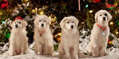Santa cumple los deseos de todos los niños de Pineville, pero algo sale mal y el espíritu de la Navidad comienza a desaparecer. Foto:vía Netflix