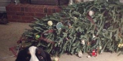 El perro no puede con la culpa Foto:Reddit