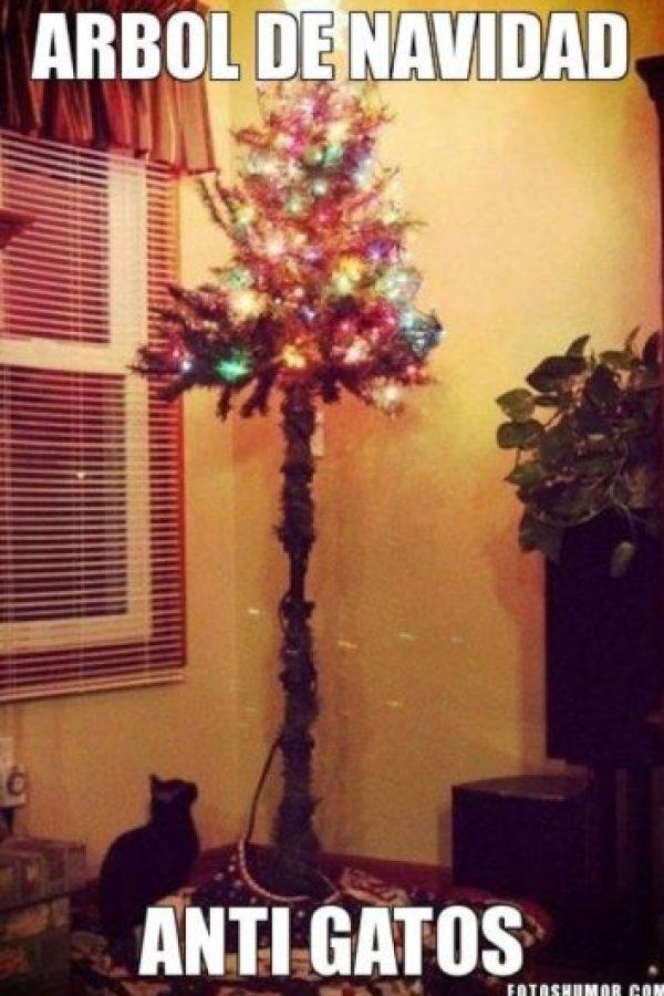 Perfecto árbol anti-gatos Foto:Know Your Meme