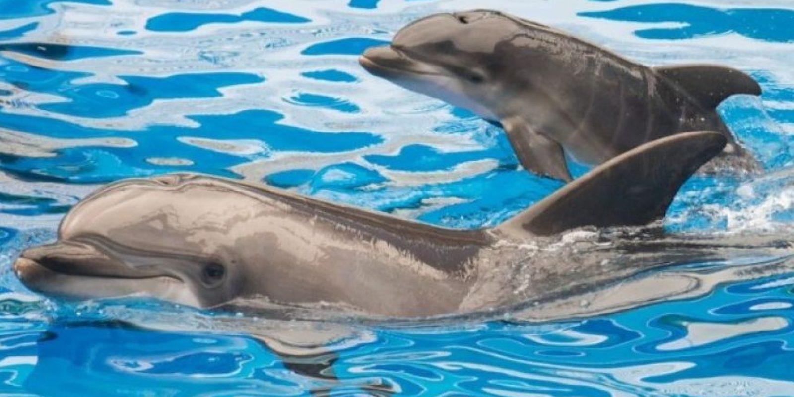2. Delfines Foto:Getty Images