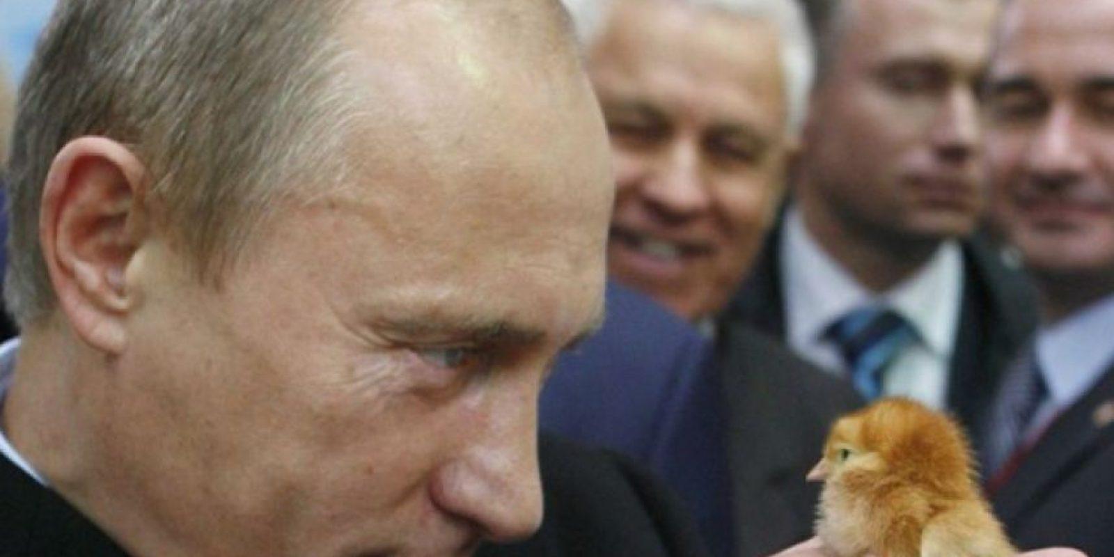 Por último, Putin se tomó esta foto con un pollito Foto:Imgur/Reddit