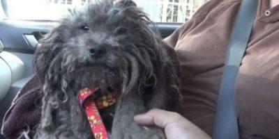 El perro estaba en muy malas condiciones; tenía el pelaje en pésimo estado y estaba muy asustado.