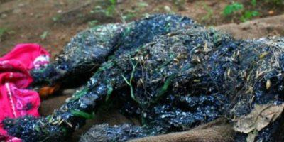 1. Escalofriante: Así rescataron a un perro que fue momificado vivo Foto: