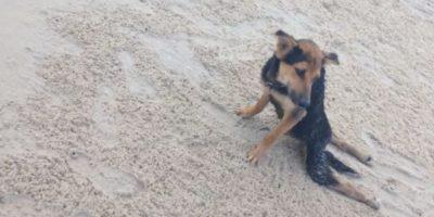 Encontró a un perro paralítico y esto fue lo que hizo con él Foto:Facebook.com/HelpSaveLeo